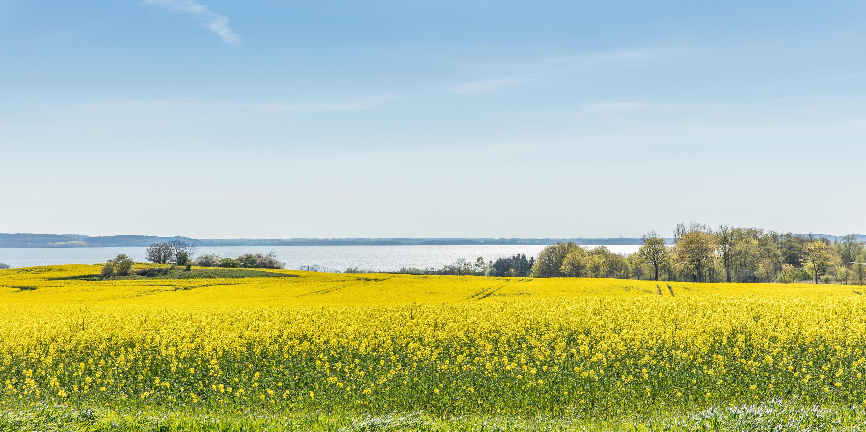 Rapsfeld Nationalpark Ostsee